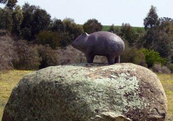 Trumbull-Baltimore-wombat